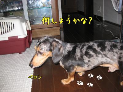 IMG_5122-20090820.jpg