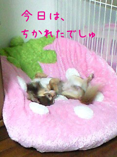 PA0_0009_20090712205724.jpg