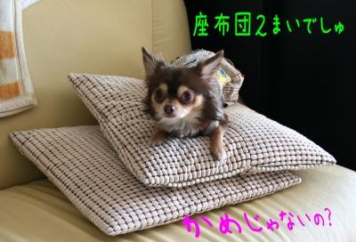 h-IMG_1079-1.jpg