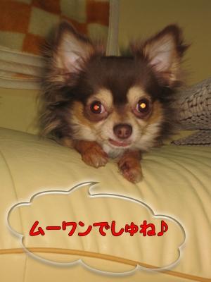 h-IMG_3067-1.jpg