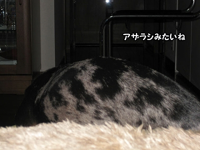 h-IMG_3299-1.jpg