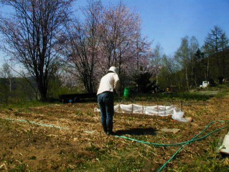 2009.4.~2009.5.6 147畑と桜