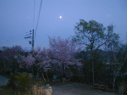 P1010001桜と月