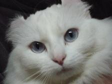kitty1 16