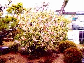 写真kokoro-20060407DSCI0001a