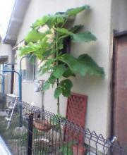 不思議な木②P252i0002687003.jpg