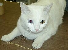 写真-猫img1867.jpg