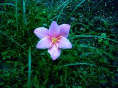 謎の花 20060919.JPG