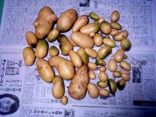 写真-20061130ジャガイモの収穫DSCI0006.jpg