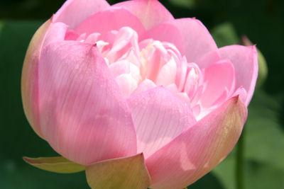 【花はす】アップ