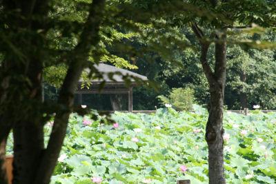 【花はす】公園全景
