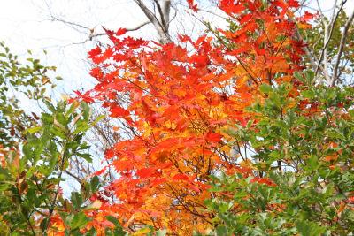 【湯殿山】一部紅葉
