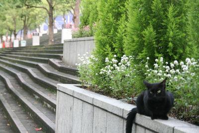 【朝散歩】黒全身