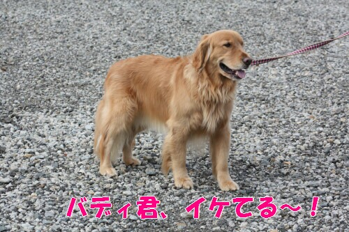 bu-15130001.jpg