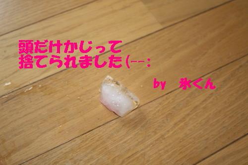 bu-29160001.jpg