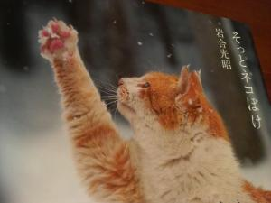 伸ばした猫の手に…