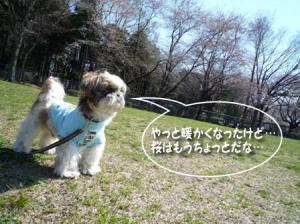 久しぶりの鶴間公園