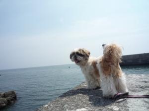 海~♪ バックシャンの小太郎(笑)