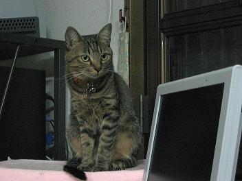 2006-10-3arue.jpg