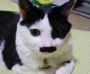 2006-9-29higemi.jpg
