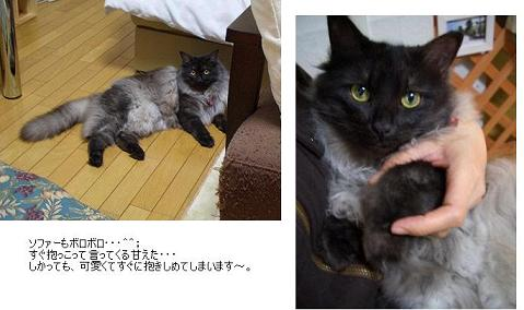 fuwarin(azuku)2006-4-5.jpg