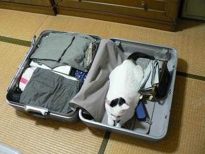 sizukun2006-12-1_3.jpg