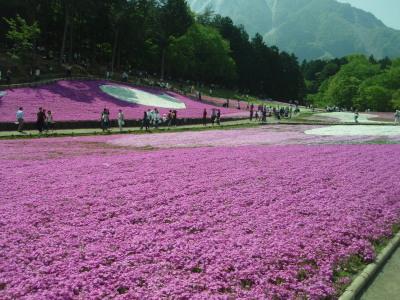 芝桜遠景2