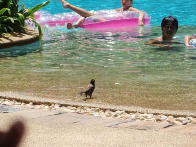 プールと鳥