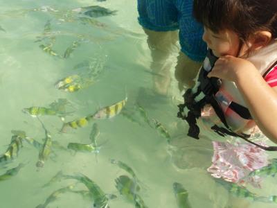 魚いっぱい