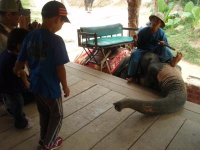 象さん尾で向かえ