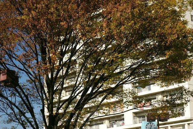 最寄の駅前の木