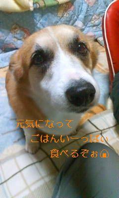 20080130013155_ed.jpg