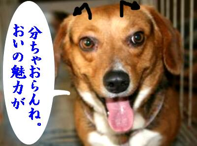 san-satuma-7s-4.jpg