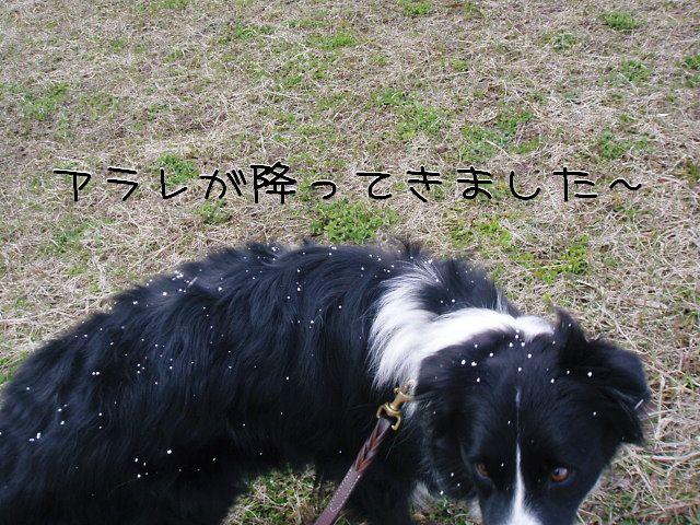 また雪か・・・