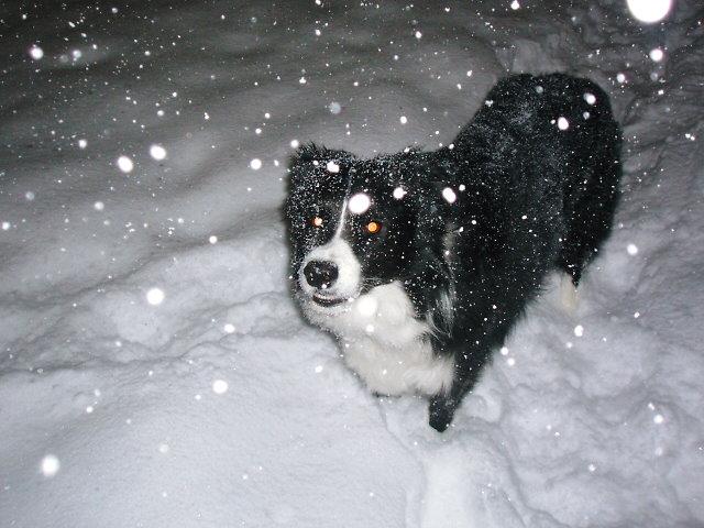 吹雪デス・・・