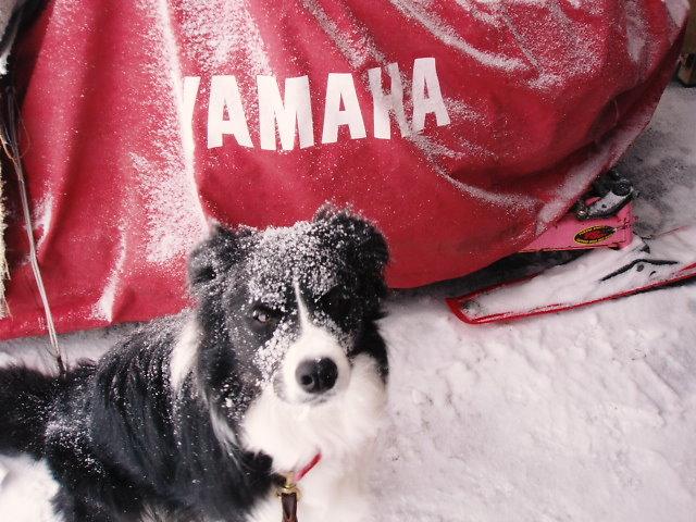 早く雪ほろってよ~