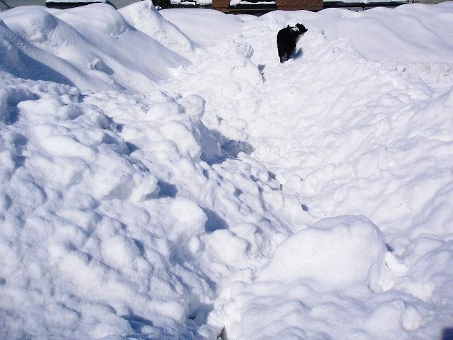 ボクは~♪雪山探検隊♪