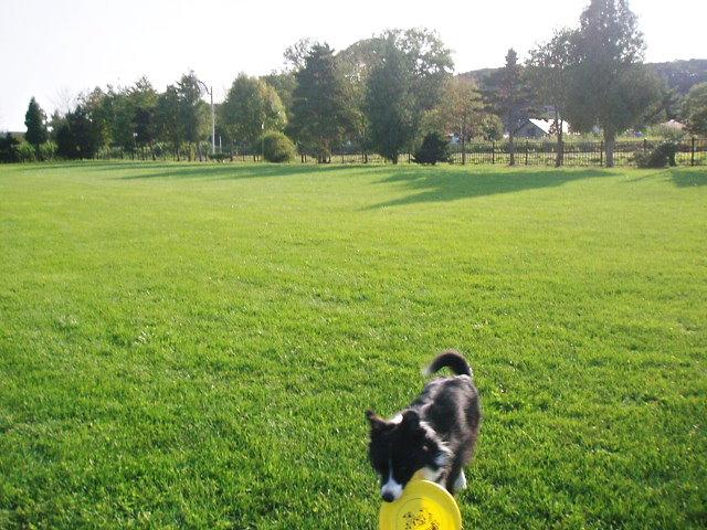 素敵な芝生です♪
