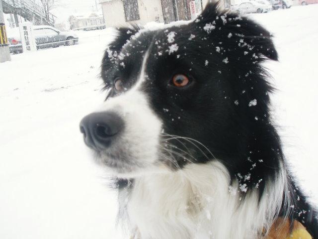 雪が降る降る