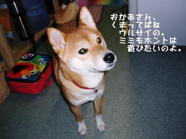ミミちゃん