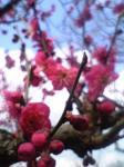 06-03-03_13-13.jpg
