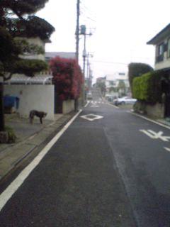 06-04-11_11-13.jpg