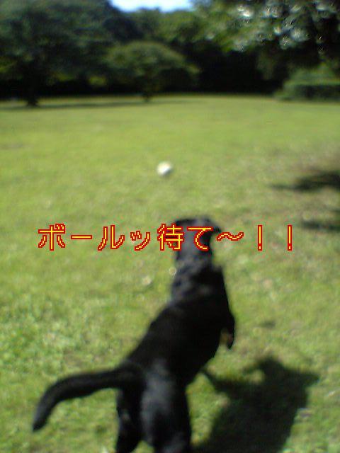 20060929235515.jpg