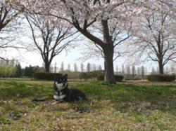 misato2.jpg