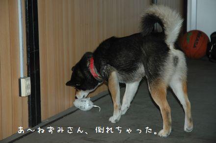 DSC_0036m_20090311013137.jpg