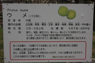 東谷山FP 036