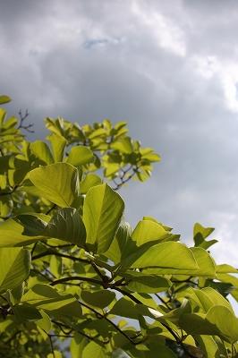 四季の森 286