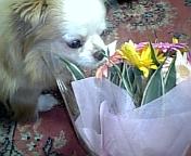20090607-flower1.jpg