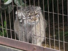 200903318_cat
