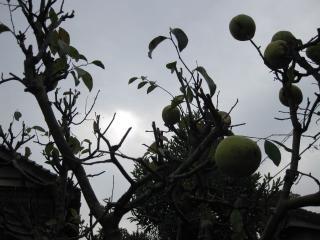 200910241_fruit